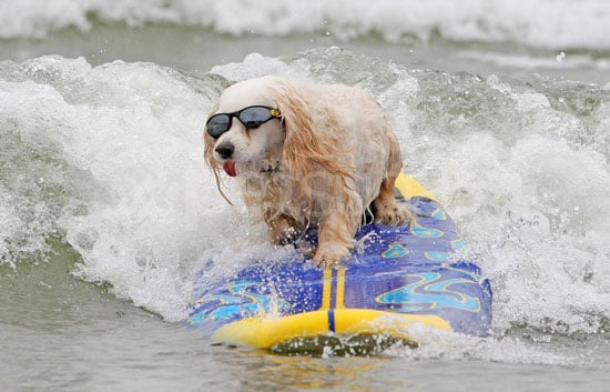 Sugar Shout Out: Surf's Up For These Pups!