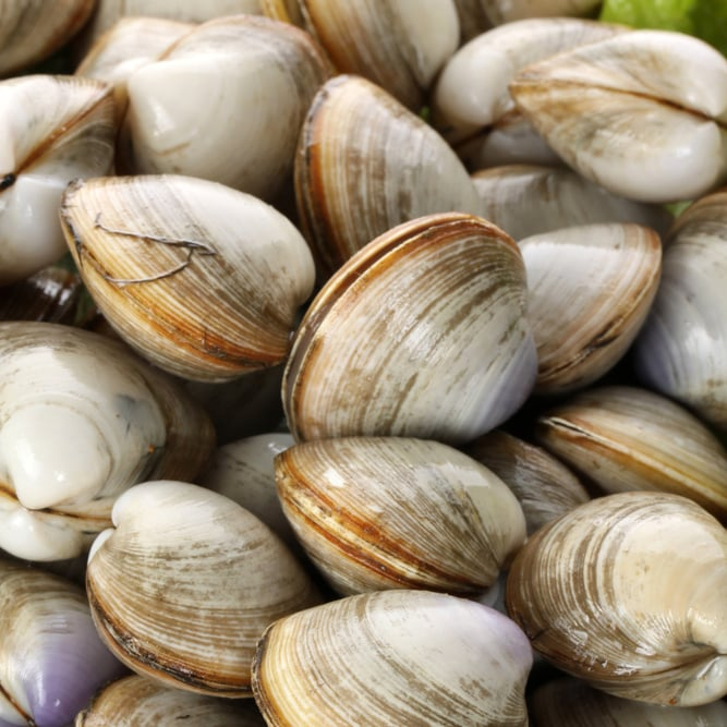 How to Buy Clams, Oysters, Mussels, and Scallops ...