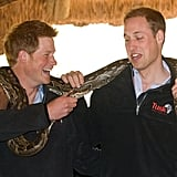Things got a little dangerous as Harry prodded William with an African rock python during their visit to Lesotho in June 2010.