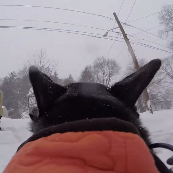 A Dog's Snow Day Video