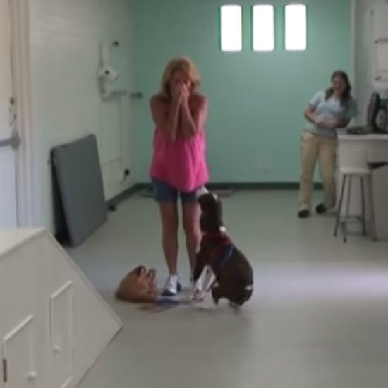 فيديو لكلب مشلول يتمكن من المشي مجدداً