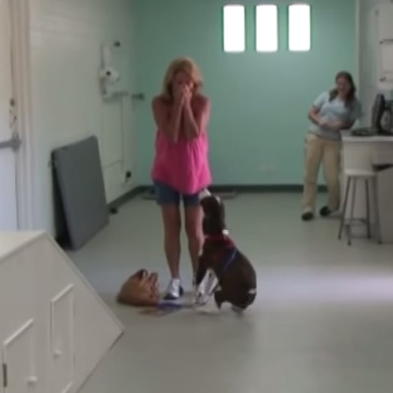 Paralyzed Dog Walks Again