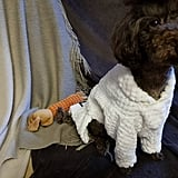 These adorable Bathrobe Sets ($29 and up) are available in an array of colours and come in several sizes to accommodate doggos big and small!