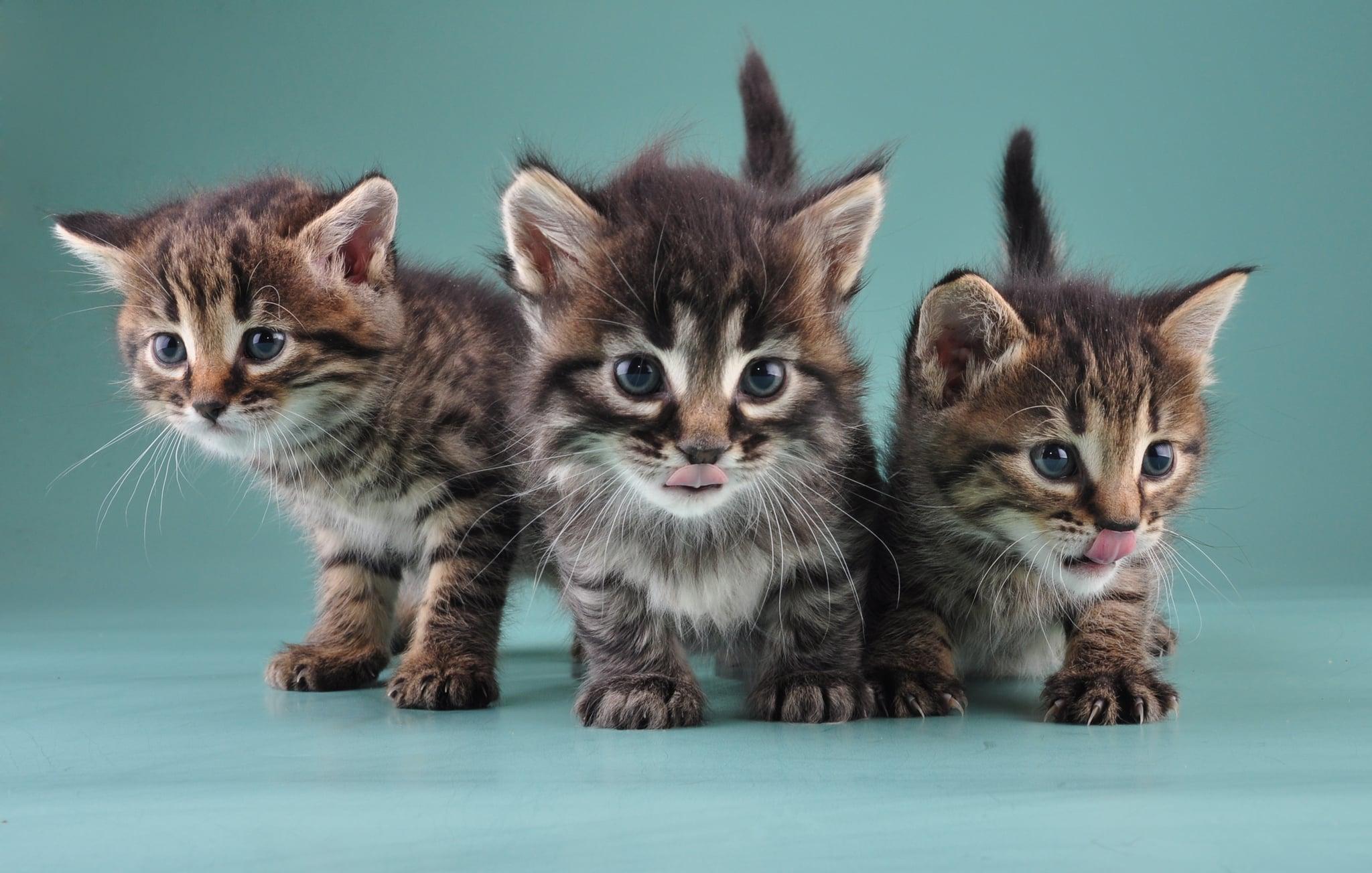 Most Popular Cat Names Of 2014 Popsugar Pets