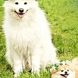 Bark Festival Flower Crown Dog Toy