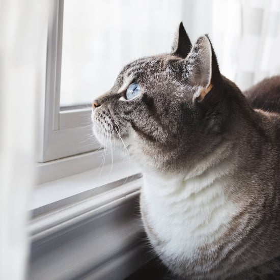 How Long Can Cats Be Left Alone?