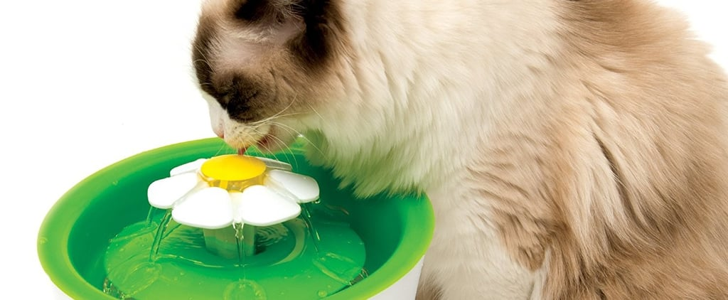 Best Cat Products on Amazon