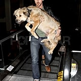 Pictures of Ryan Gosling With Dog