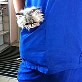 This pocket friend
