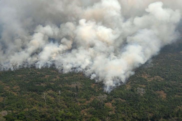 Where To Donate To Amazon Rainforest Fire Relief Popsugar News