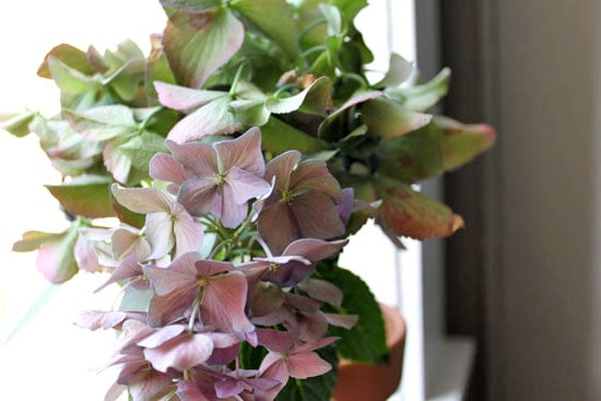 Sample Photos from the Canon Rebel T1i