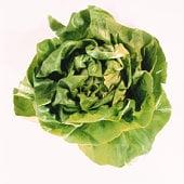 Keep Your Lettuce Longer