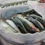 Be sure to get a large quantity of sardines. These babies are addictive and a serving is about four sardines.