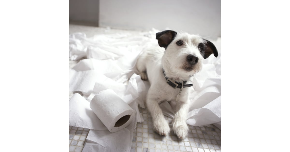 Aspca Most Toxic Household Products For Pets Popsugar Pets