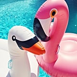 . . . Had a Close Encounter With a Flamingo