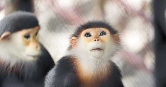 Why The Body Shop Is Helping Monkeys Find Love
