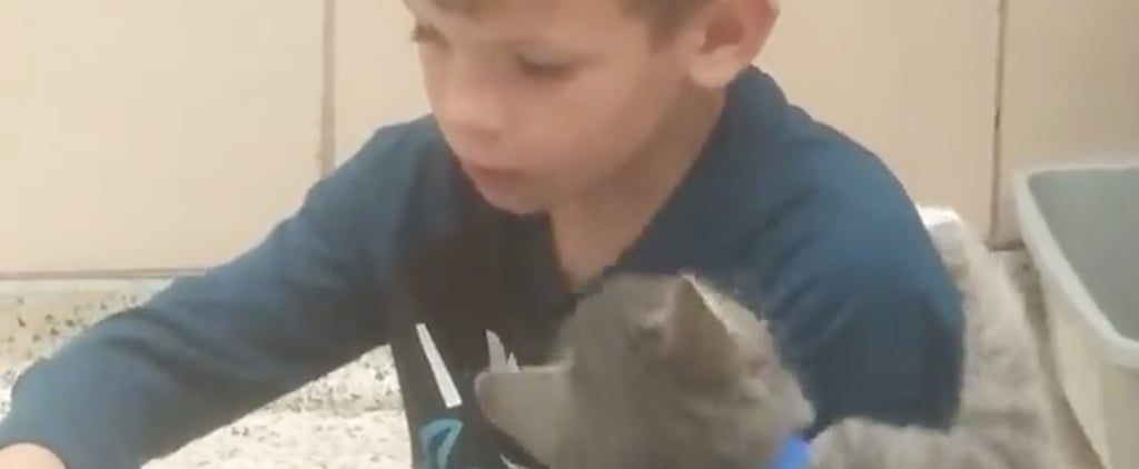 Little Boy Reading to Shelter Cat   Video