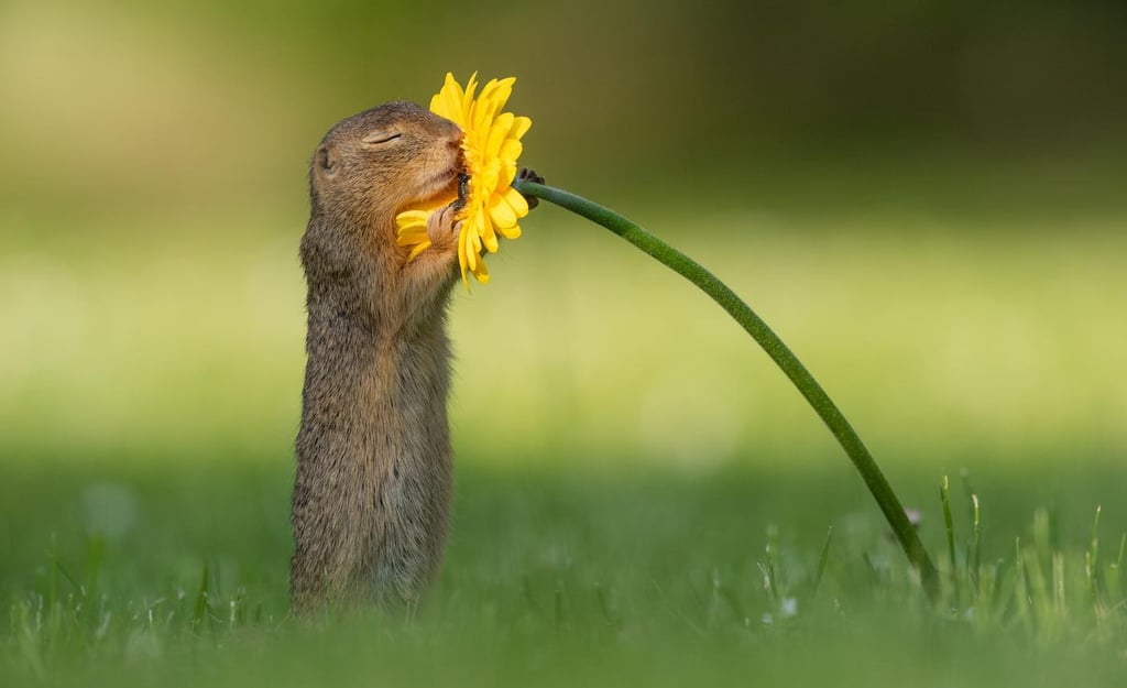 This Photographer Took Pictures of a Squirrel Smelling Flowers and, Welp, Now I Love Squirrels
