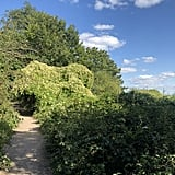 The Parkland Walk (Haringey)