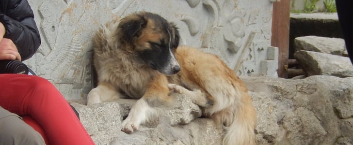 The Street Dogs in Peru Are the Friendliest Pups You'll Ever Meet