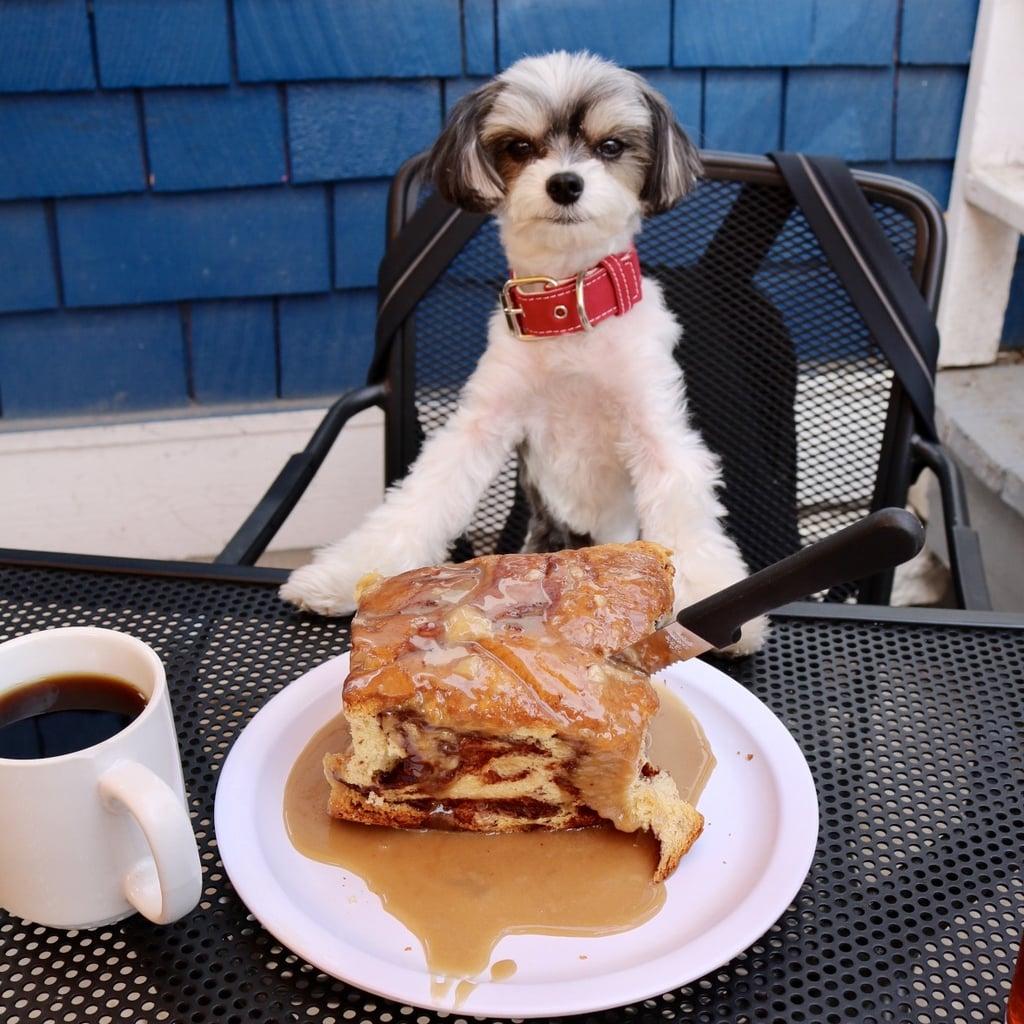 Mountain View Restaurant At Cheyenne Mountain Colorado: Tinkerbelle The Dog Colorado Trip