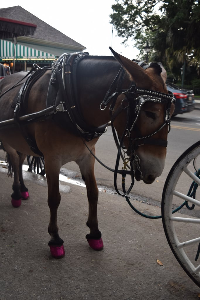 The Carriage Rides