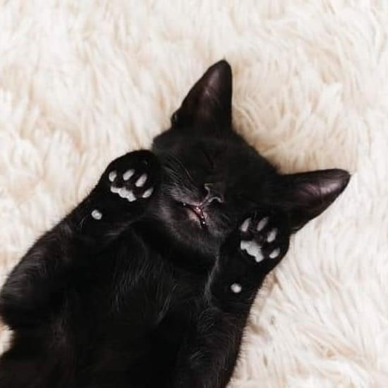 Photos of Black Cat Pictures