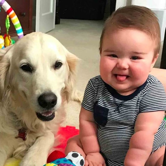 Photos of Golden Retrievers and Babies
