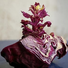 Benefits and Nutrition of Red Cabbage