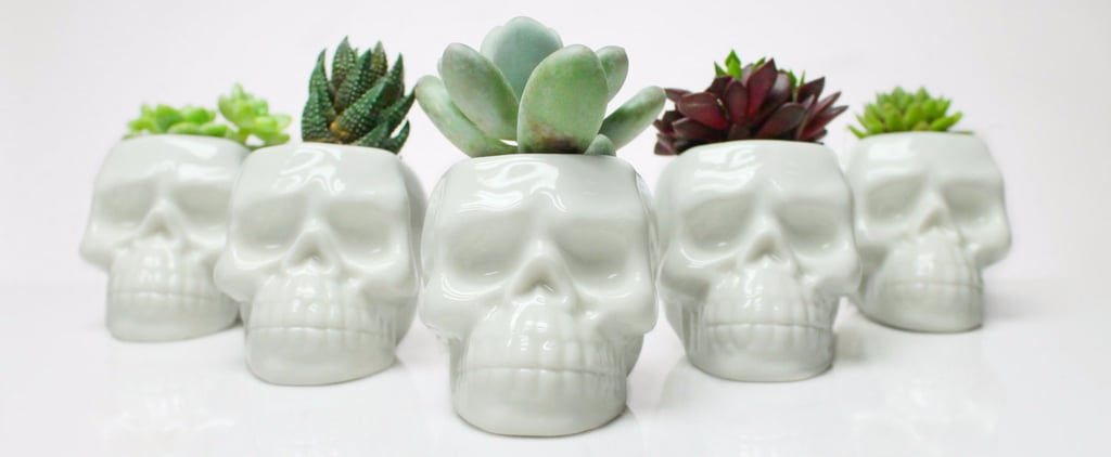 These Trendy Skull Planters Will Speak to Your Dark, Halloween-Loving Soul