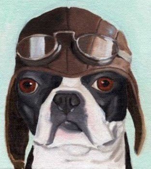 Boston Terrier Prints from Etsy