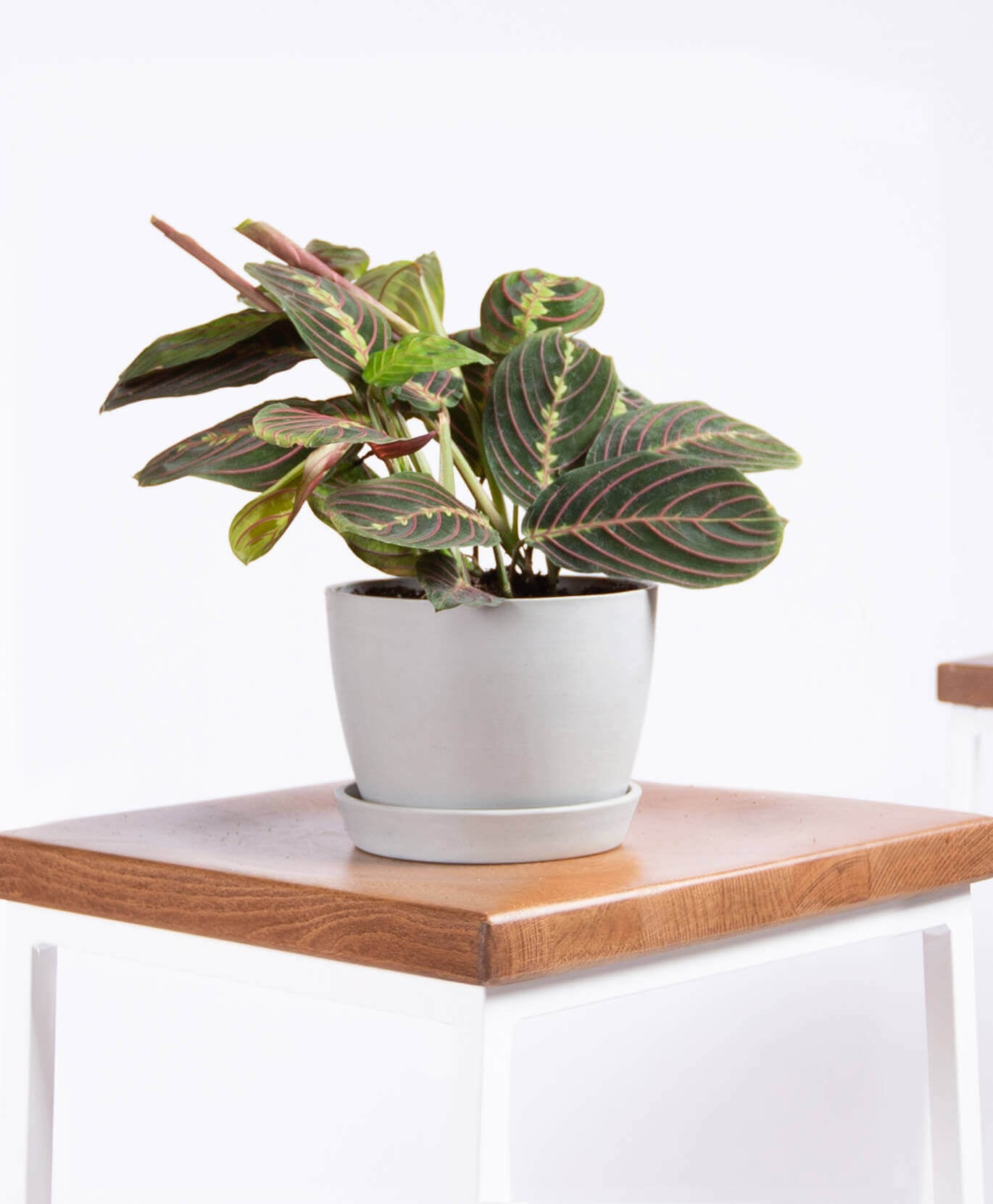 Best Indoor Plants For Dorms Popsugar Home