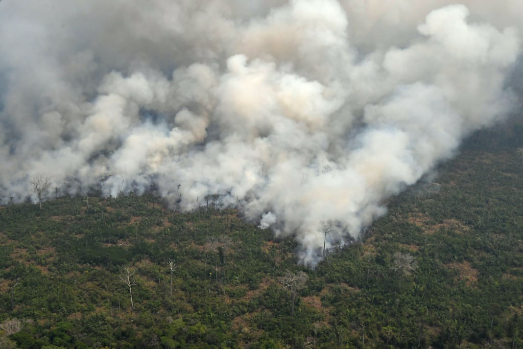 Where to Donate to Amazon Rainforest Fire Relief