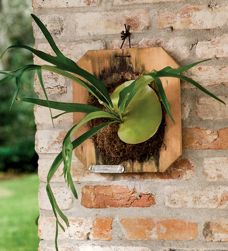 Think of it as vegan taxidermy – the Staghorn Fern Plaque ($45) is perfect for neo-traditionalists and plant-lovers alike.