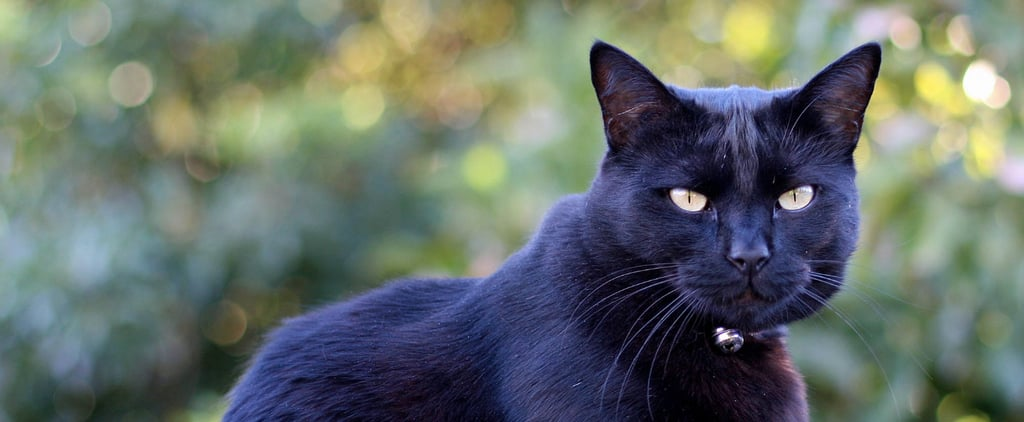 Why Halloween Is a Particularly Scary Holiday For Black Cats