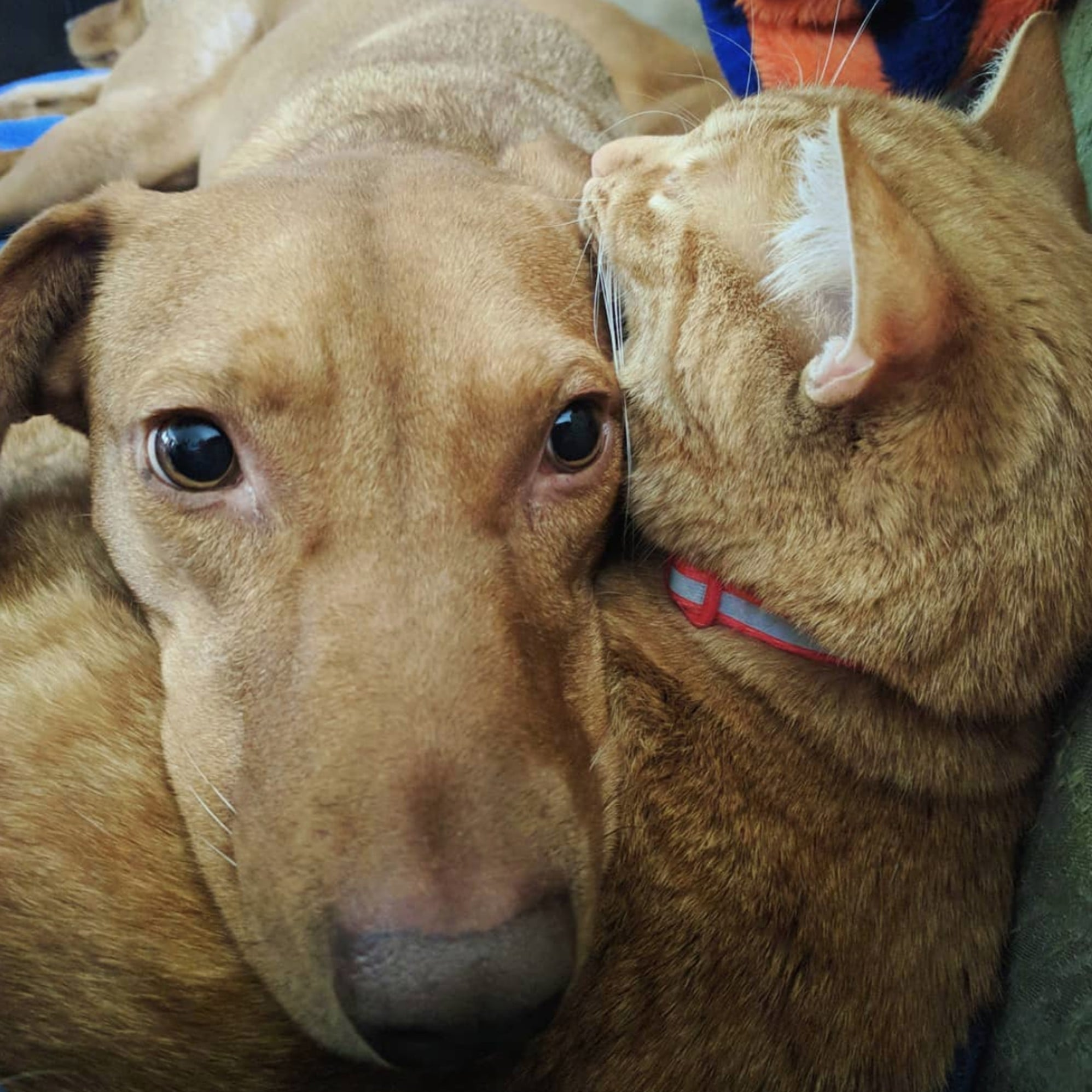 Videos Of Cat And Dog Who Snuggle Together Every Day Popsugar