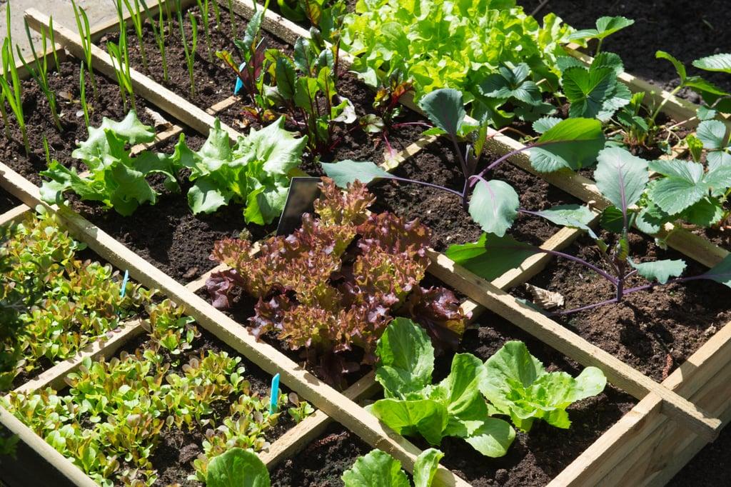 Start a container garden.