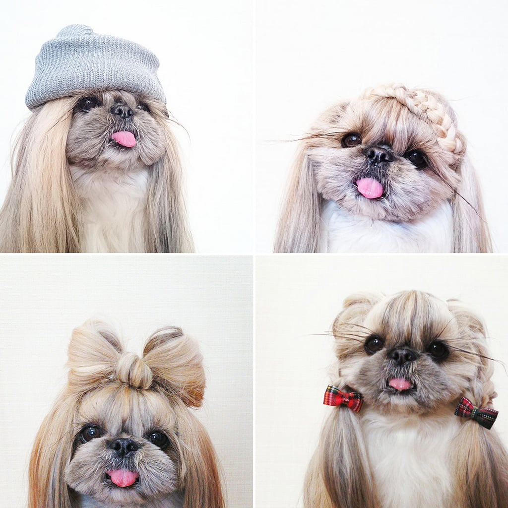 Kuma The Dogs Instagram Hairstyles Popsugar Beauty