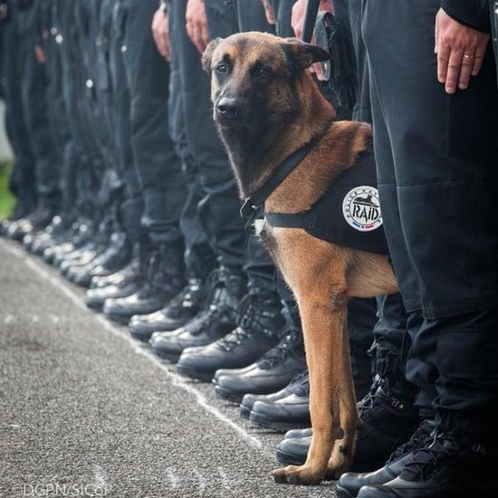 Police Dog Killed in Paris Raid
