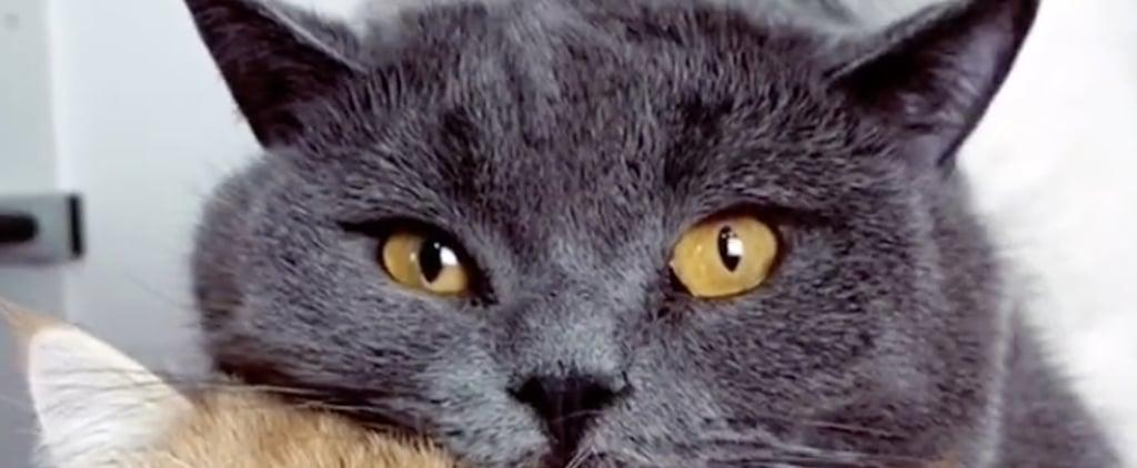 Cute and Funny Pet Videos on TikTok
