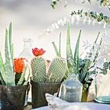 Miniature Succulents