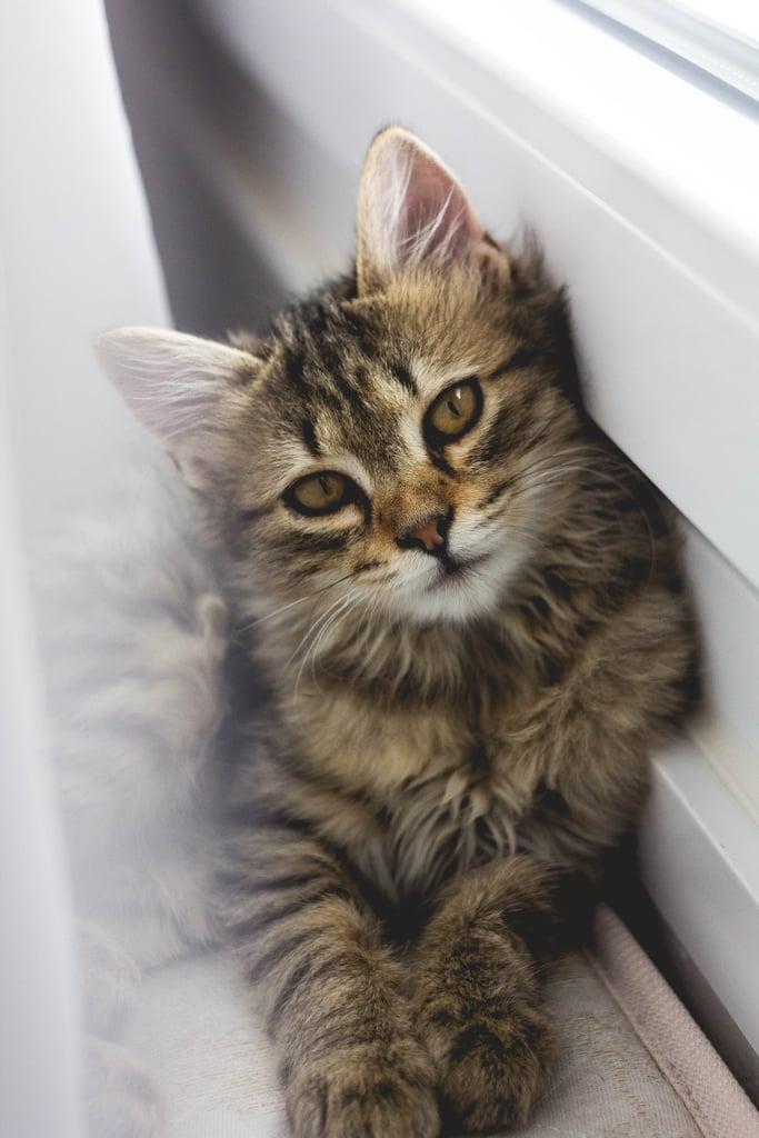 Skeptical, but so cute.