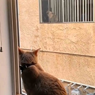 Cats in a Long-Distance Relationship