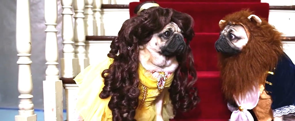 Unamused Pugs Re-Creating Beauty and the Beast Is So Funny You'll Watch It Twice