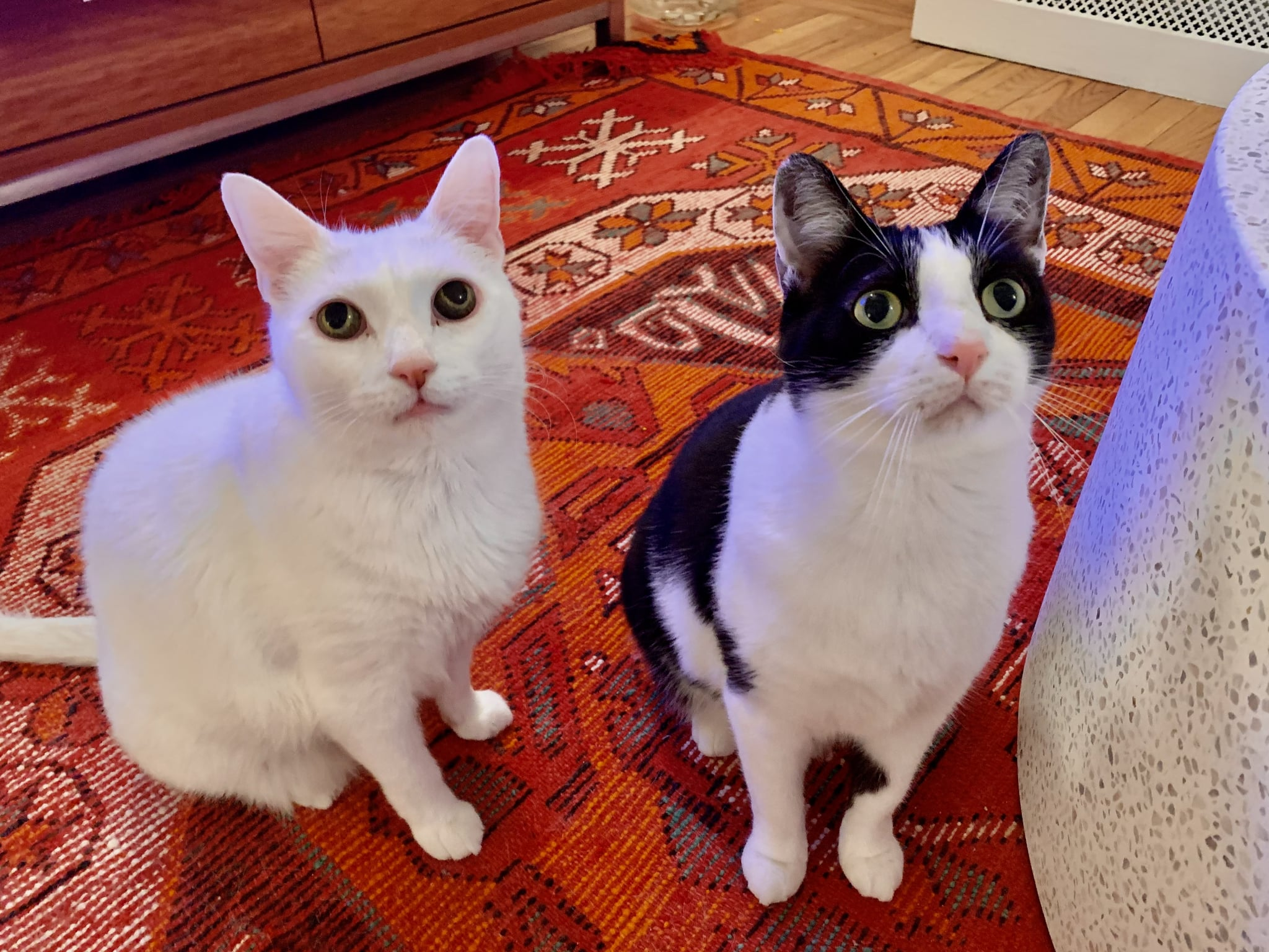 Alfredo and Tiny