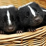 Weaselly Wee Ones