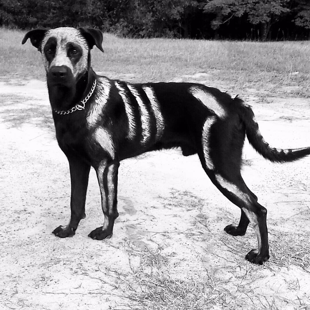 painted skeleton halloween costume for dogs popsugar pets