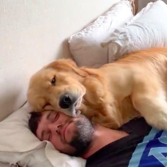 Man Gets Woken Up by Golden Retreiver