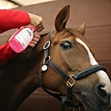 A little detangler does the trick as this horse gets his mane plaited.