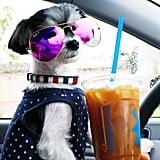 Drank caffeine like a  Colorado Springs local, at Dutch Bros Coffee!